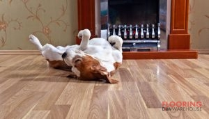 Dog Rolling on a Dog Friendly Floor